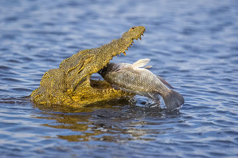 Botswana & Zambezi Region - Birding & Photography Houseboat on Chobe