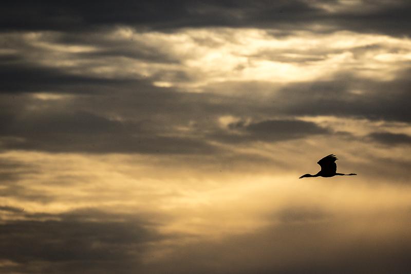Botswana & Zambezi Region - Birding & Photography