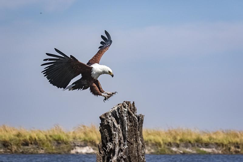 Botswana Region Birding and Photography
