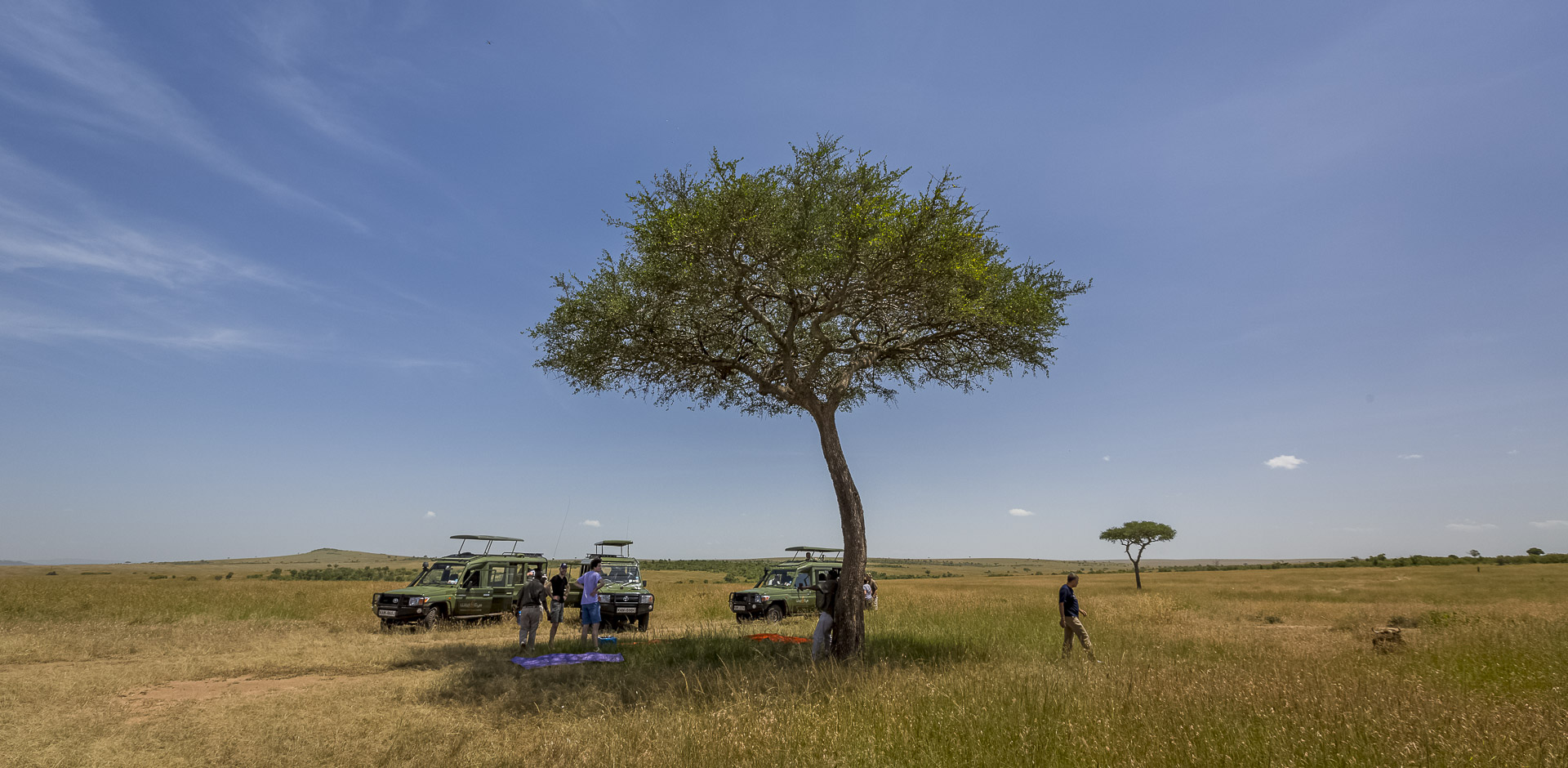 Wild Expressions Travel News - 100% African