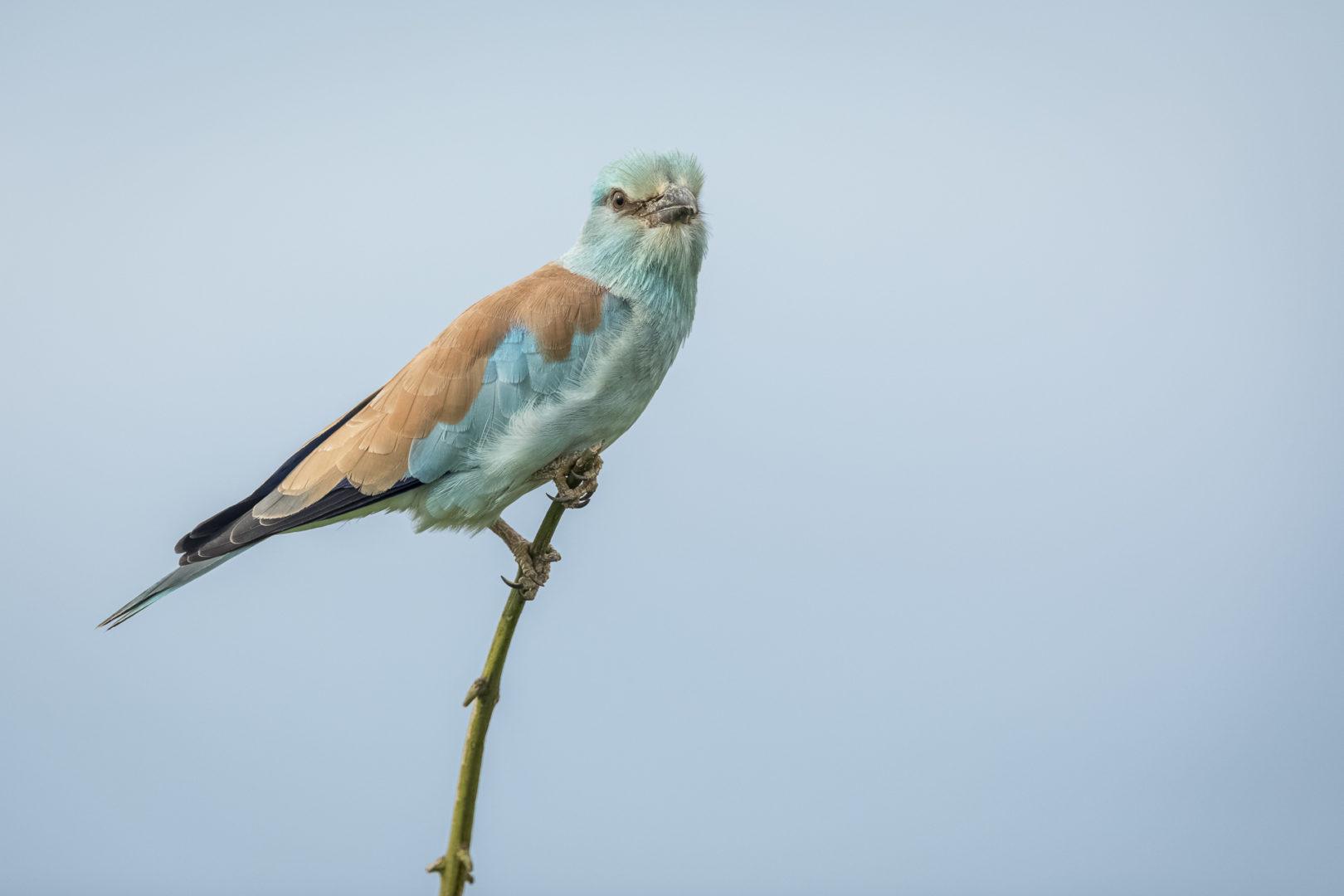Private Day Safari in Kruger National Park European Roller