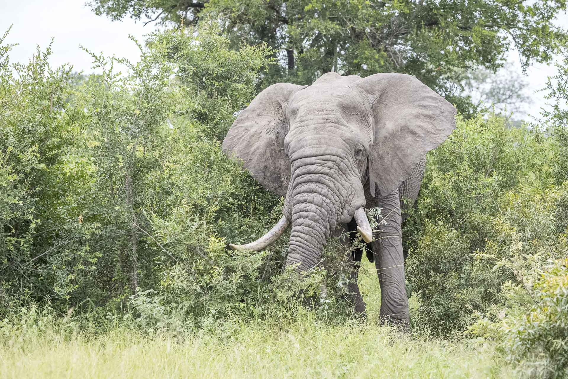 Private Day Safari in Kruger National Park image of emerging tusker