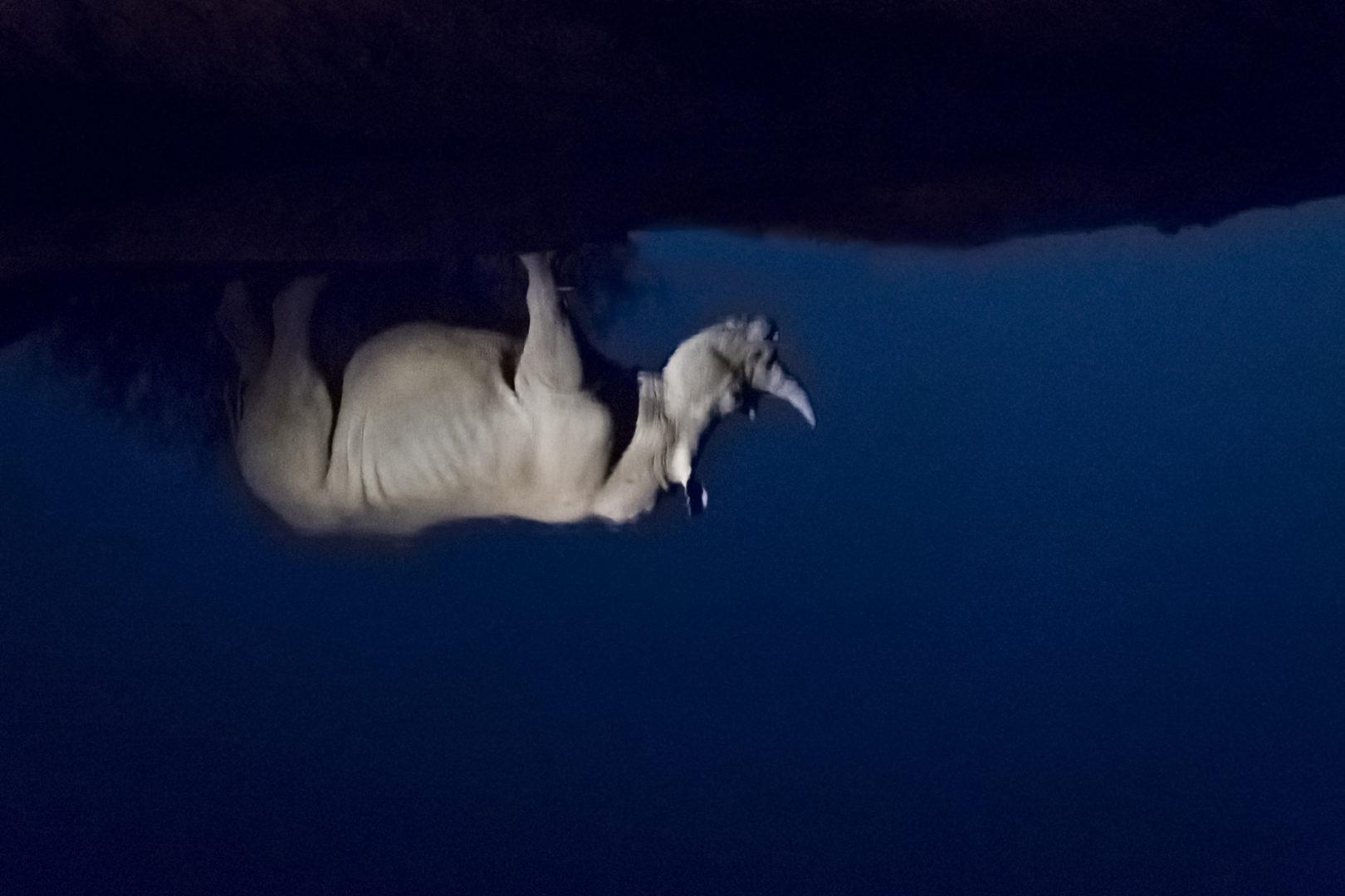 4 Day Madikwe Photo Tour Rhino reflection photo
