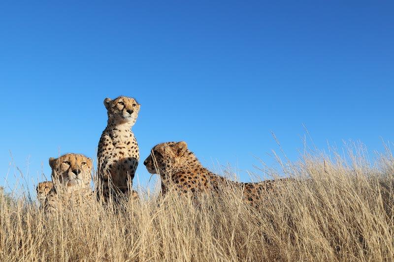 Tiger Canyon Guided Photography Safari