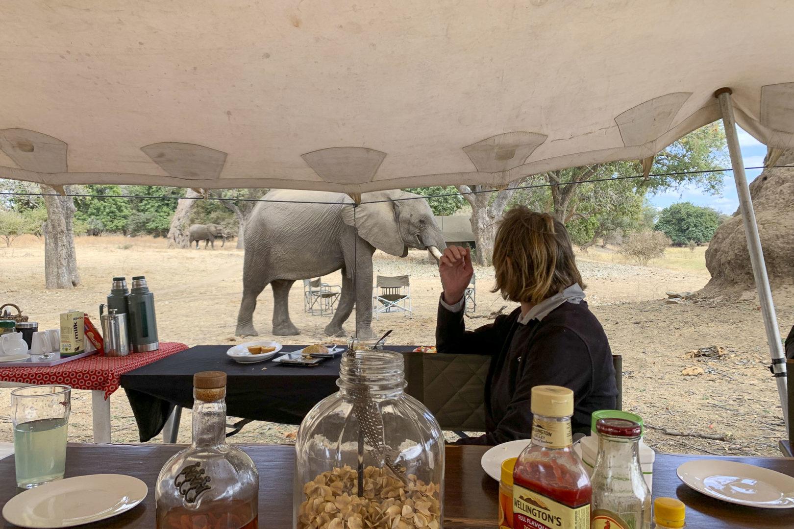 Mana Pools Camp - Elephants in camp